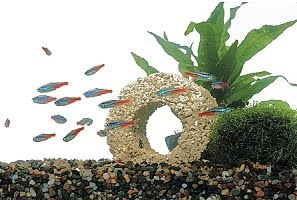 Bio Blocks Clears Up Cloudy Water and Reduces Water Changes Frequency