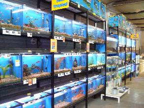 Image result for goldfish in store