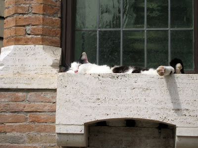 Window Box Nap