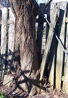 The fence in the tree