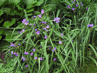 Tiny purple-blue flowers
