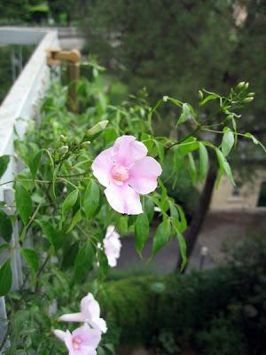 Balcony blooms