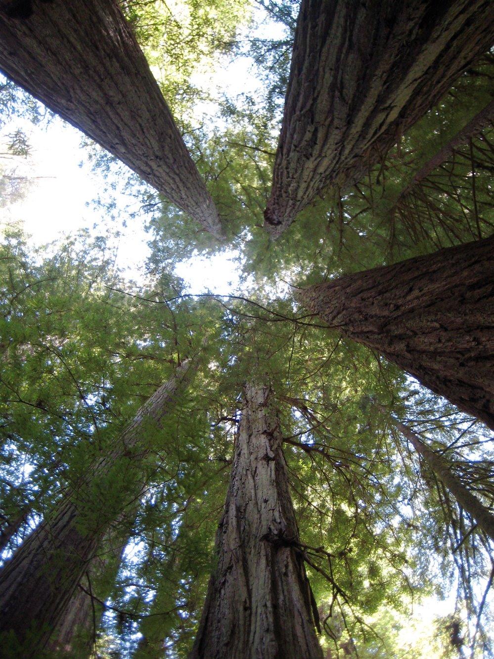 [Redwoods.jpg]