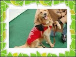 Norcal Golden Retriever Rescue Newsletter