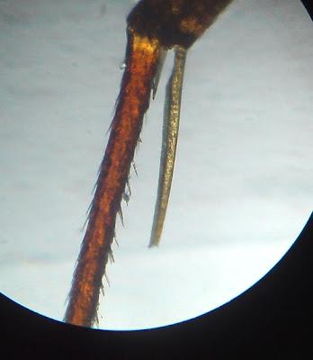 Ant  Parts - Legs