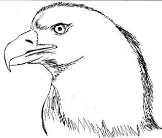 660 Koleksi Sketsa Gambar Hewan Burung Elang HD Terbaik