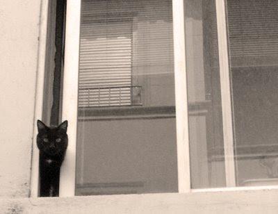 ay los gaticos