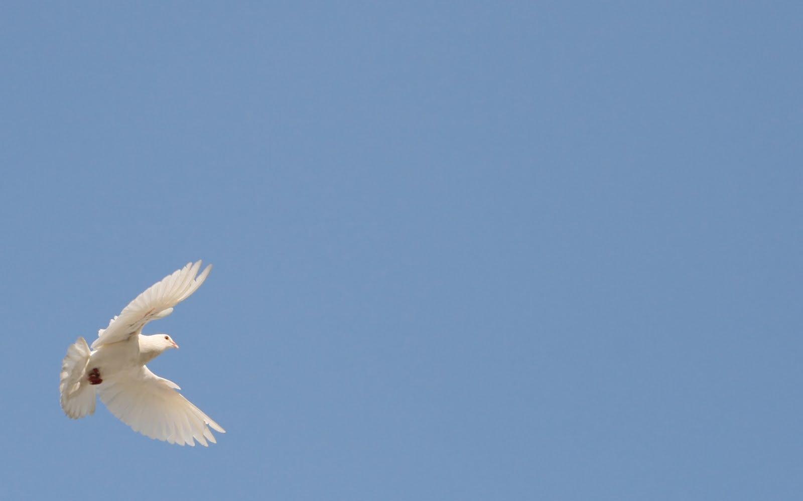 A Paz Que Trago Em Meu Peito é Diferente Da Paz Que Eu: Despertando Para A Vida