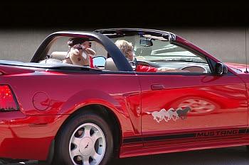 Mustang mit Pony bei der Detroit Dream Cruise © Cornelia Schaible