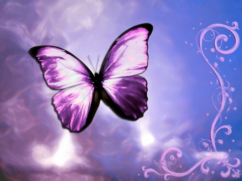 Cute Photography Love Butterfly Wallpaper