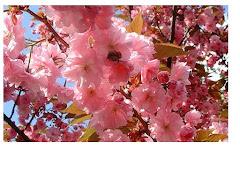 *Asian Flowers