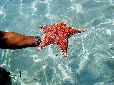 Lagoa Azul brasil angra dos reis ilha grande praia passeio de escuna paraiso paradisiaca estrela do mar