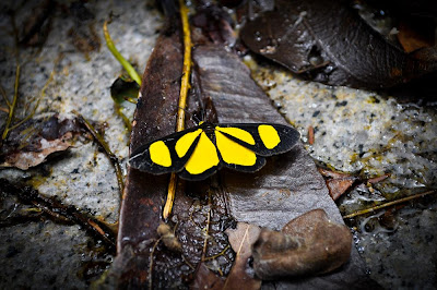 viajando sem frescura rio de janeiro rj sana macae região serrana cachoeiras camping borboletas