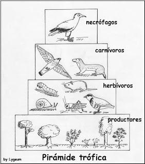 Relaciones Entre Seres Vivos Los Ecosistemas