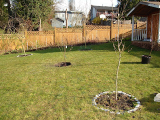 Morello cherry waiting for soil, and Frost peach nearby