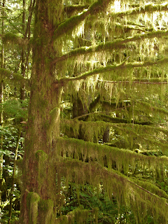 Spooky moss-covered tree