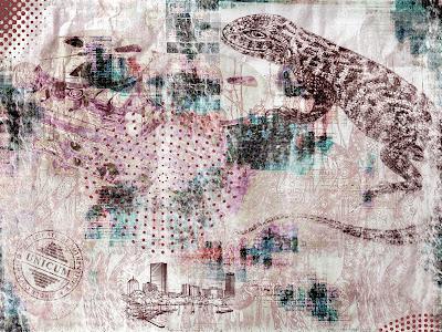 Lizard Darwin Evolution