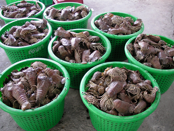 Supplier Shrimp Mail: Slipper Lobster, Radiated Scallop, Musk Crab, Dollfus