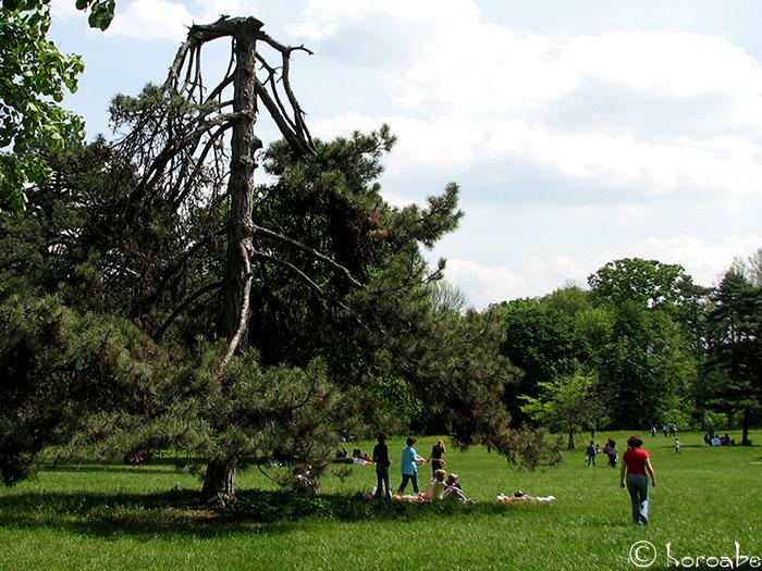 punk rock tree
