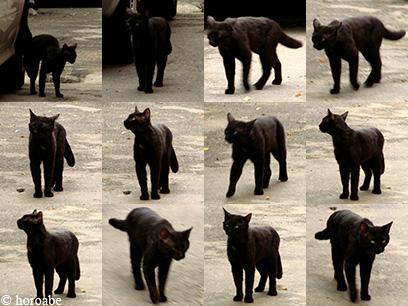 pisica neagra - ipostaze