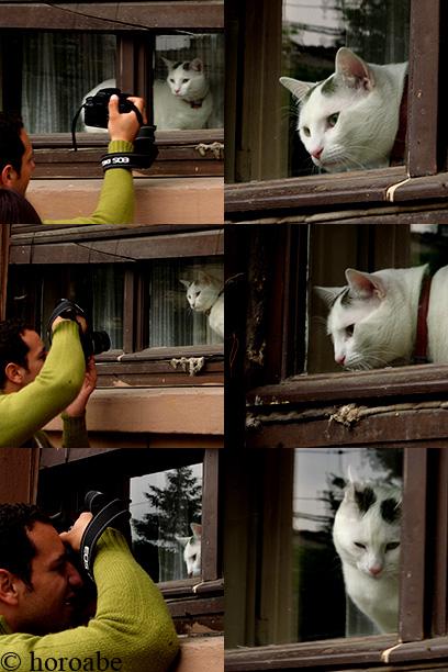 pisica alba - sedinta foto