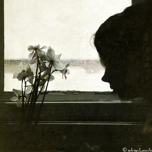 daffodil_lament