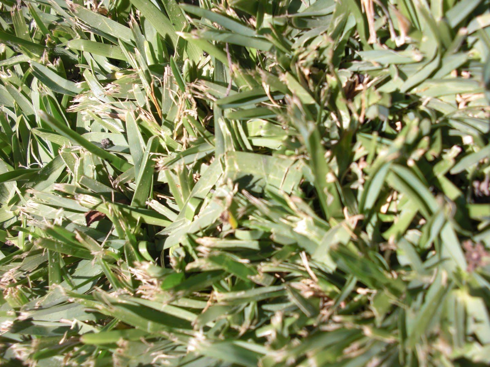 Monocot Plant Images
