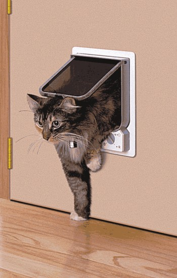 Our Furry Friends Tips And Advices Respect Your Cat S
