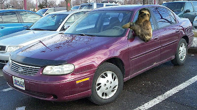 It Seems That Taking Pictures With Their Cars Is Not The Only Way Sloths Aspire To Spend Time These Days Recent Discoveries Show Since