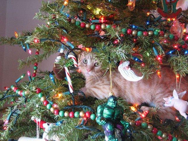 Hübsche Weihnachtsbilder.Cats On Christmas Trees Funny Crazy
