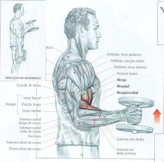 exercícios para antebraço com halteres