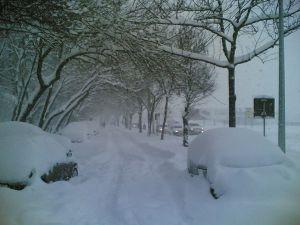 [iarna2008.jpg]