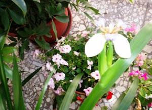 Flor de dia