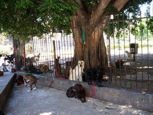 32 VERFIQUE PASEADOR NO LLEVA MÁS DE 8 ANIMALES Y NO LOS ATE A UN POSTE