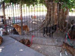 33 ESTO NO ES PASEO - PERROS FELICES, SON LOS PASEADOS