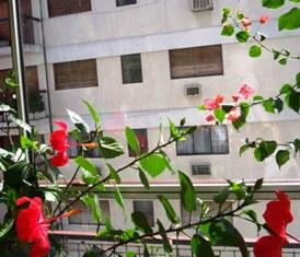 FLORES BALCÓN FEBRERO 08