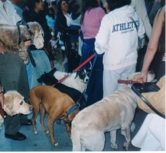 Bendición Mascotas S Mtín de Porres