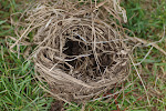 Once Upon A Nest ...