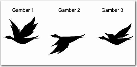 Animasi Burung Terbang ~ Multimedia BW 2