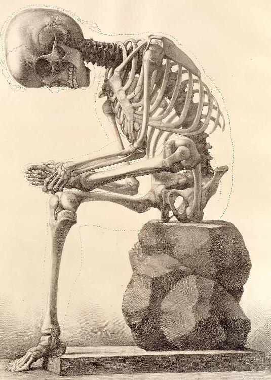[human_skeleton.jpg]