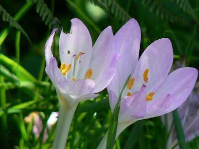 Bunga Bunga Cantik Namun Mematikan