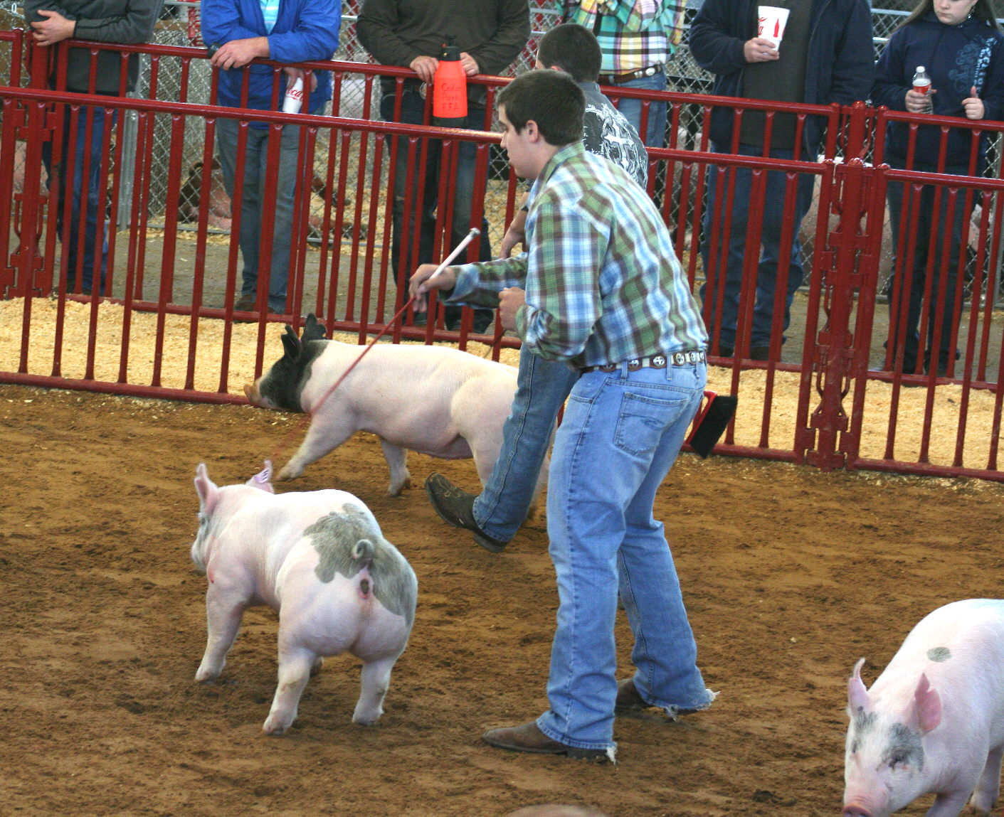 Rockwall County 4 H News Fort Worth Stock Show News