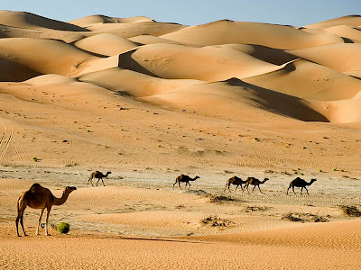 Adventure Travel in Dubai – Exciting Excursions in the Desert!