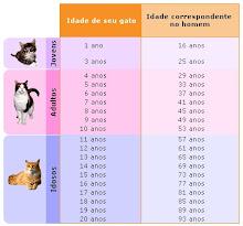 A idade do seu gatinho...