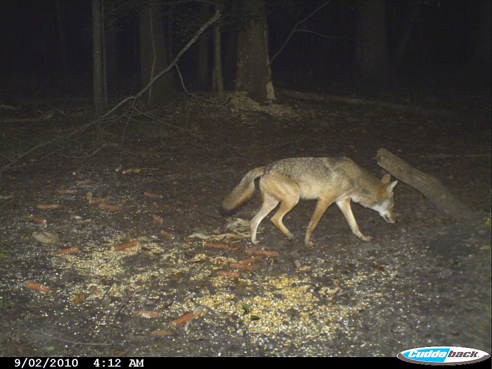 Cordray's: This game camera is in my backyard!!! That's ...
