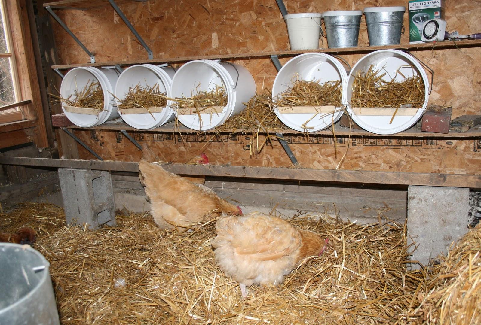 Bucket o' Chicken | Community Chickens