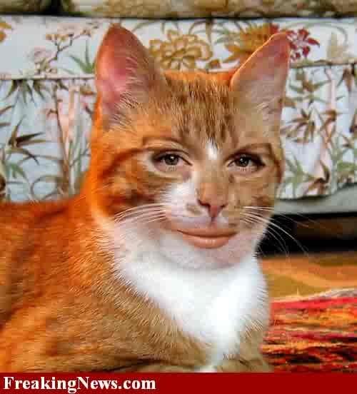 Best Antiemetic For Cats