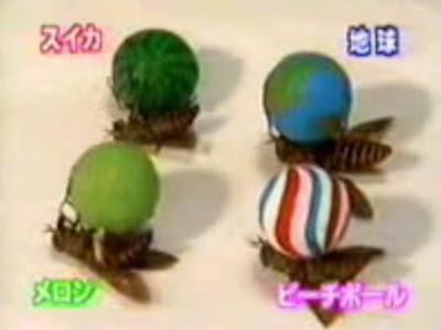 yapanosho japanese microcosmos circus on youtube