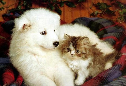Cute dog and cat friends - photo#2