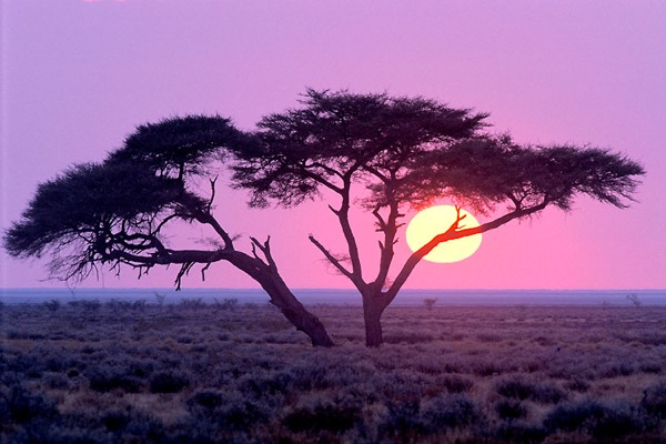 Pictures And Black African Landscapes White